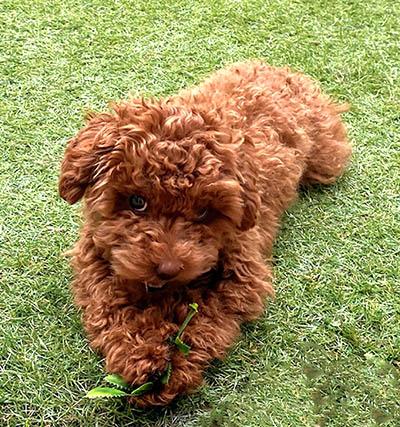 jugar con tu perro en casa. Juegos y actividades