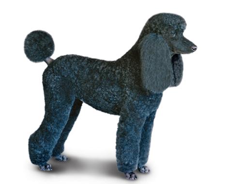 corte_cachorro
