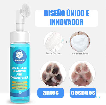 Cómo lavar las patas de tu perro caniche de forma correcta con un limpiador en espuma sin enjuague. Caniche limpia sus pies con espuma