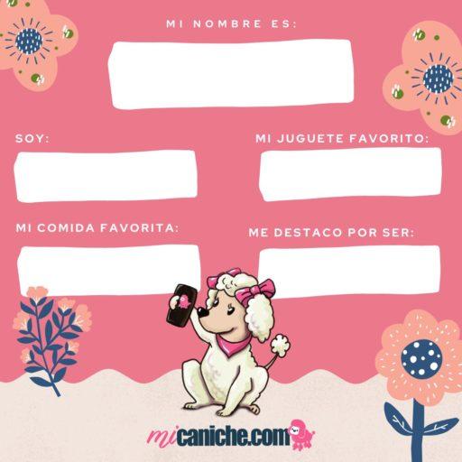 Plantilla digital para publicaciones  de historias en Instagram, color azul celeste para perros poodle o caniches, color rosa con flores, especial para presentar a tu perro