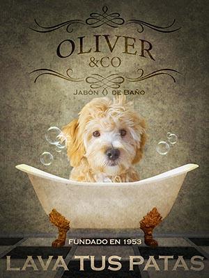 Oliver en la bañera, el maltipoo que ganó nuestro concurso de Instagram para el Calendario 2021. Descargalo aquí.