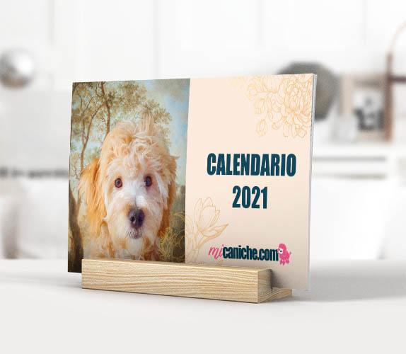 Nuestro Calendario 2021 Micaniche.com Calendario de caniches o poodle para descargar gratis.
