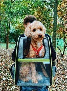Mochilas transportadoras para perros