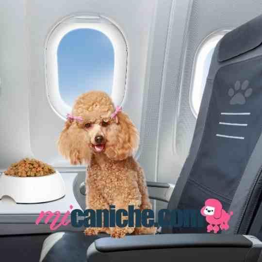 viajar en avión con tu caniche