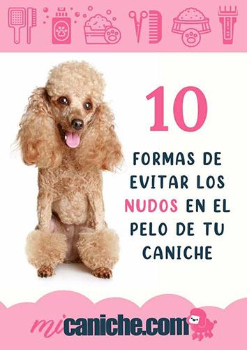 10 formas de evitar el que el pelo de tu caniche se anude. No más nudos! PDF descargable. Guía con todos los tips y consejos.