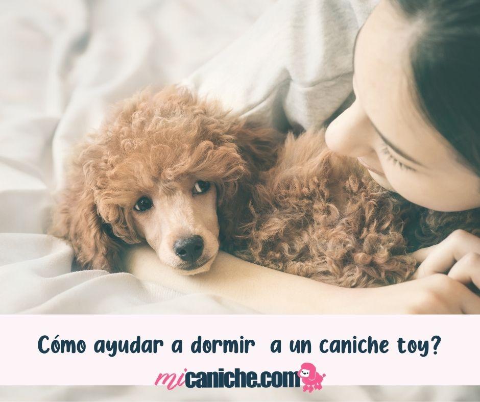 Cómo ayudar a dormir a un caniche toy? Sigue nuestros consejos!