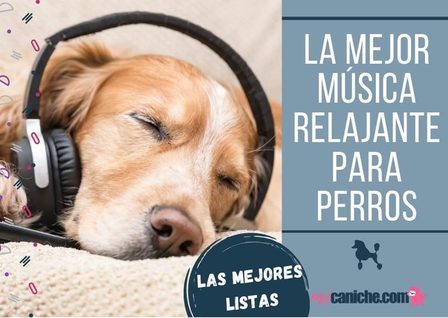 La mejor música relajante para perros de todas la razas