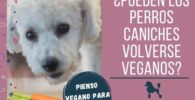 pueden perros caniches volverse veganos