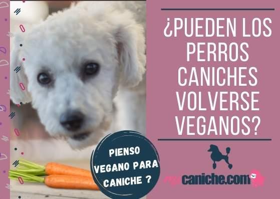 Pueden los caniches volverse veganos