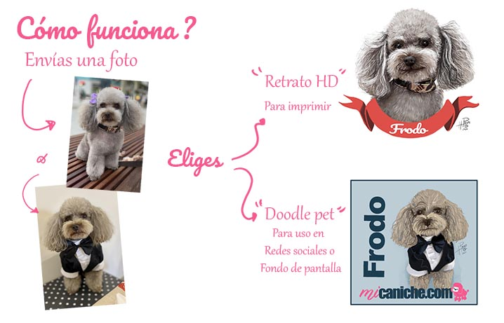 Contrata un servivcio de Retrato personalizado para tu mascota con Angie Painting