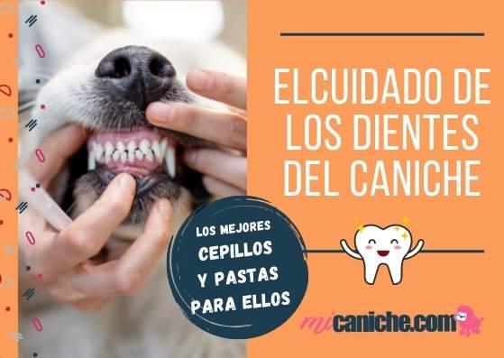 El cuidado de los dientes del caniche