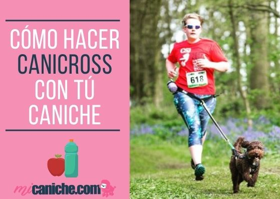 caniche canicross - Cómo hacer canicross con tú caniche ? Puedes practicar con un caniche toy o enano ?